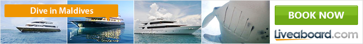 Go diving with liveaboard in the maldives
