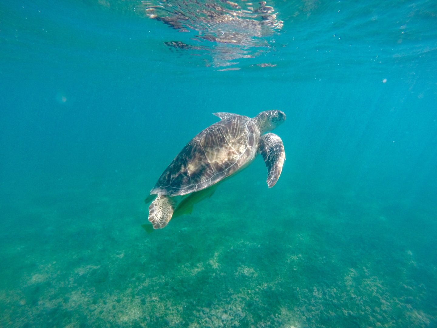 How to Swim with Wild Turtles in Akumal, Mexico