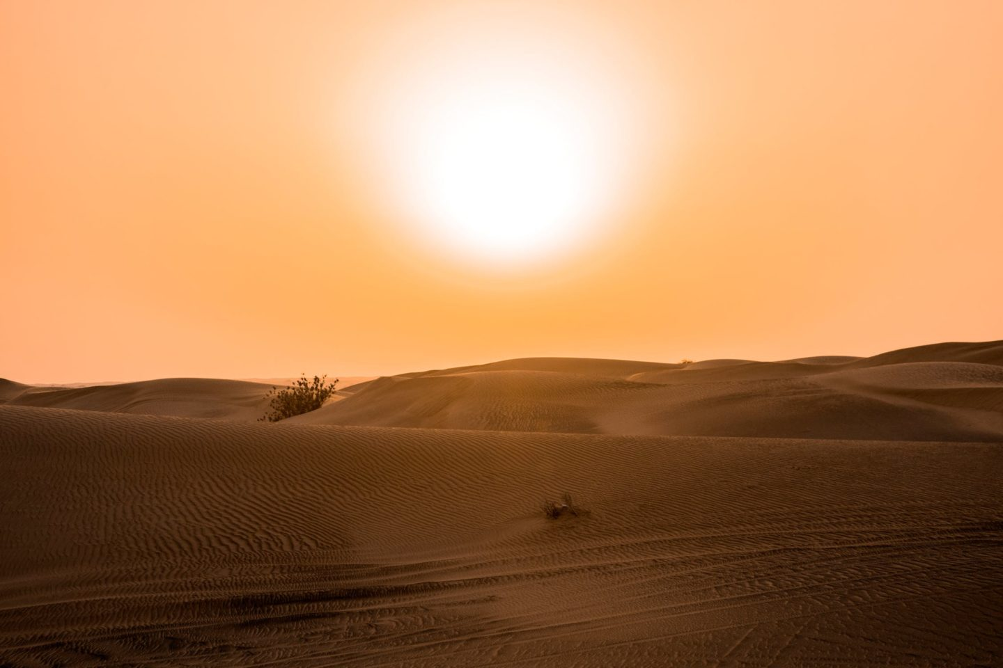 Dubai excursions in the desert, best desert safari dubai