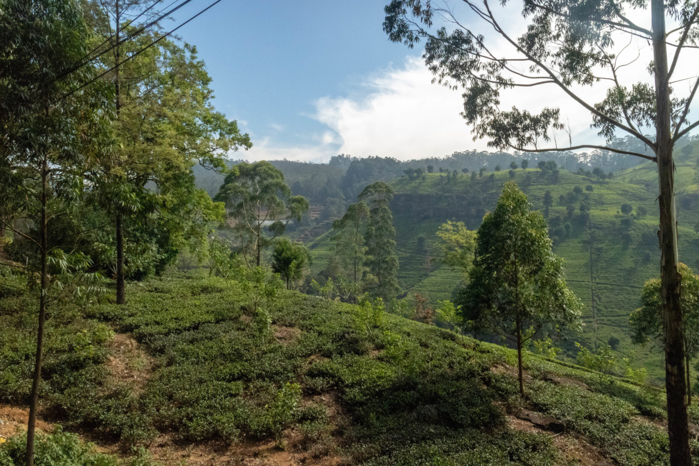 best places to go in Sri Lanka, the tea plantations