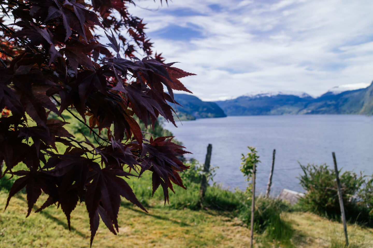 best season to visit norway, leaves by nordfjord sunny day